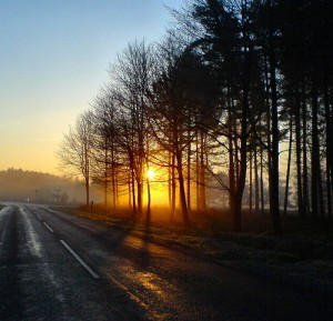 Sunrise On Cannock Chase